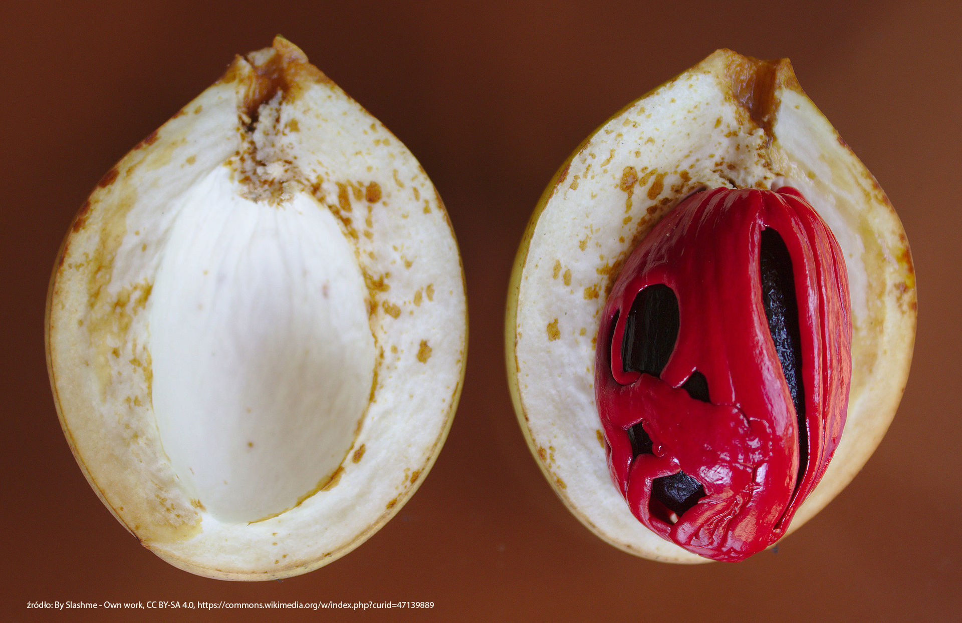 nutmeg_fruit_seed_and_aril